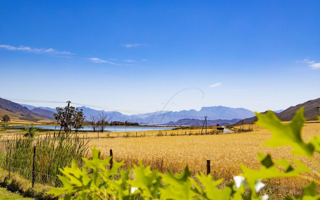 Stettyn Family Vineyards: Here Where You Can Just Sit, Sip and Relax! 