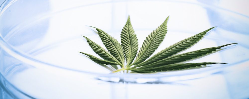 Cannabis-health-benefits-potential-commercial-uses